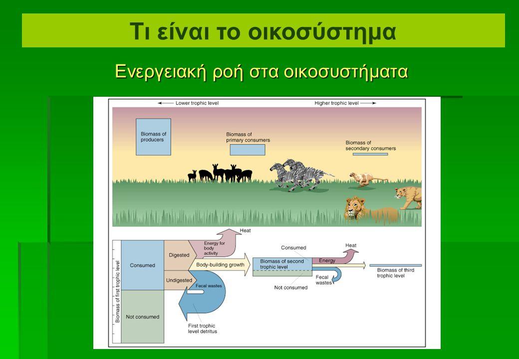 Ενεργειακή ροή στα οικοσυστήματα