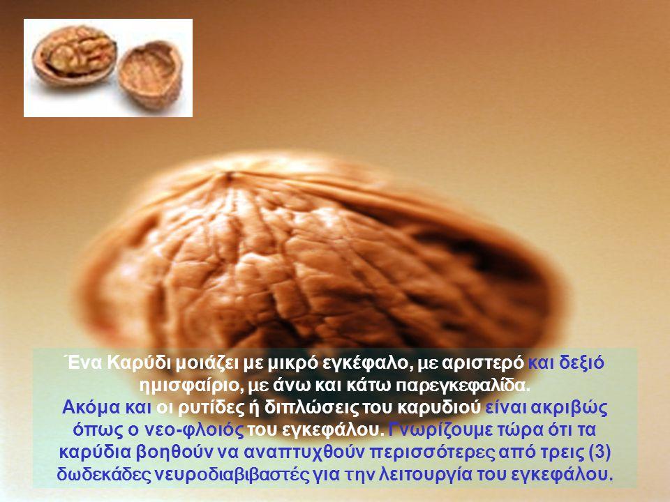 Ένα Καρύδι μοιάζει με μικρό εγκέφαλο, με αριστερό και δεξιό ημισφαίριο, με άνω και κάτω παρεγκεφαλίδα.