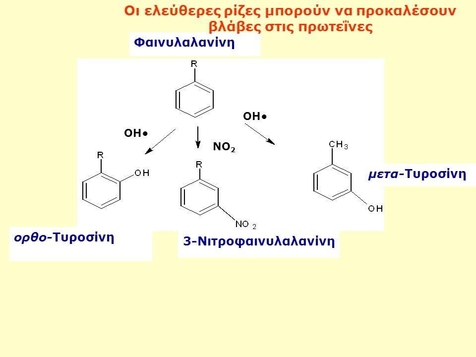 Οι ελεύθερες ρίζες μπορούν να προκαλέσουν βλάβες στις πρωτεΐνες