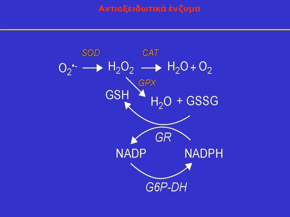 Αντιοξειδωτικά ένζυμα