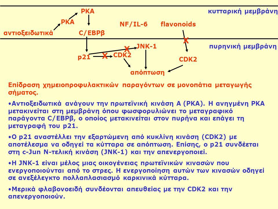 X X X PKA κυτταρική μεμβράνη PKA NF/IL-6 flavonoids αντιοξειδωτικά