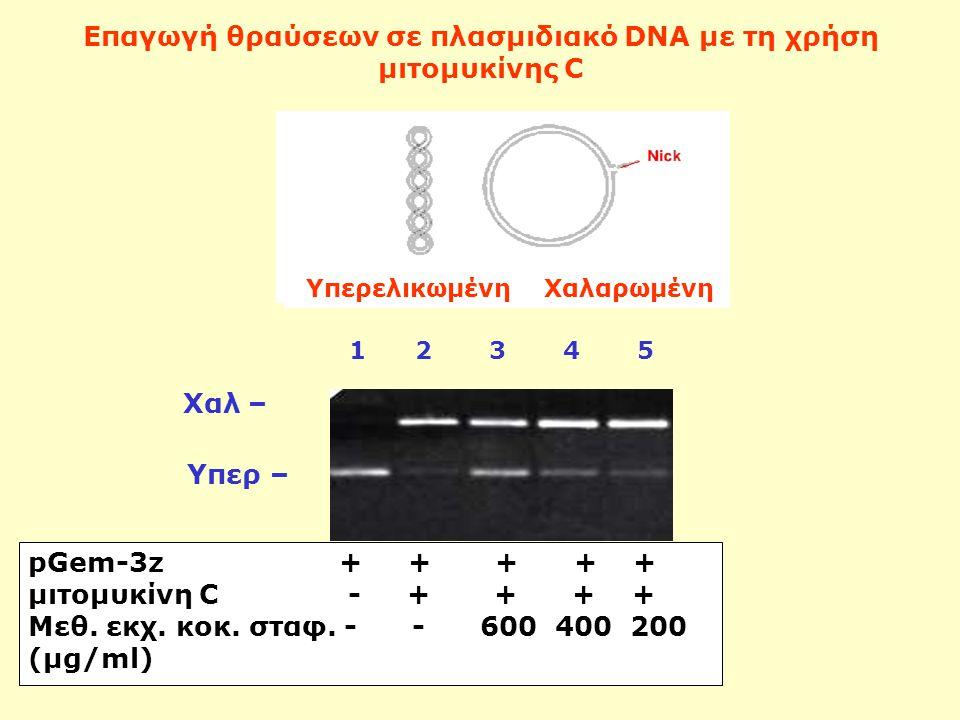 Επαγωγή θραύσεων σε πλασμιδιακό DNA με τη χρήση μιτομυκίνης C