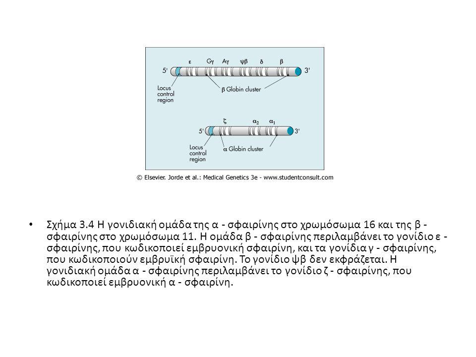 Σχήμα 3.4 Η γονιδιακή ομάδα της α - σφαιρίνης στο χρωμόσωμα 16 και της β - σφαιρίνης στο χρωμόσωμα 11.