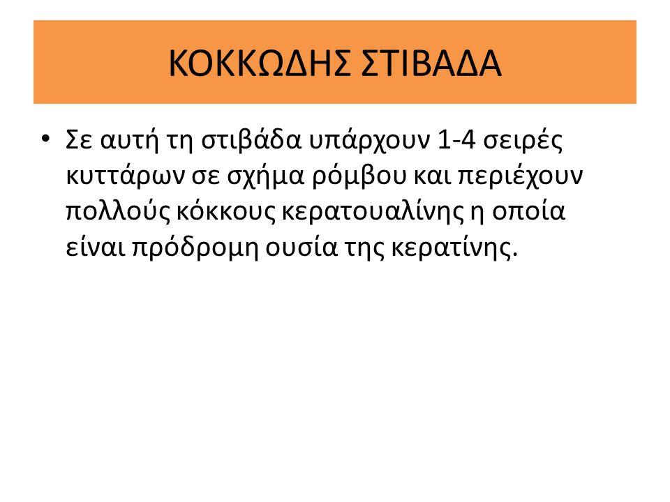 ΚΟΚΚΩΔΗΣ ΣΤΙΒΑΔΑ