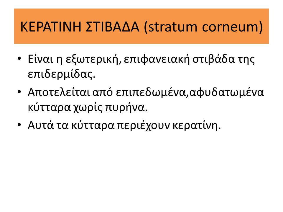 ΚΕΡΑΤΙΝΗ ΣΤΙΒΑΔΑ (stratum corneum)
