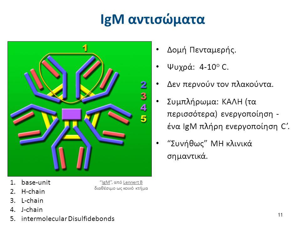IgG αντισώματα Δομή Μονομερής. Θερμά: δράση στους 37οC.