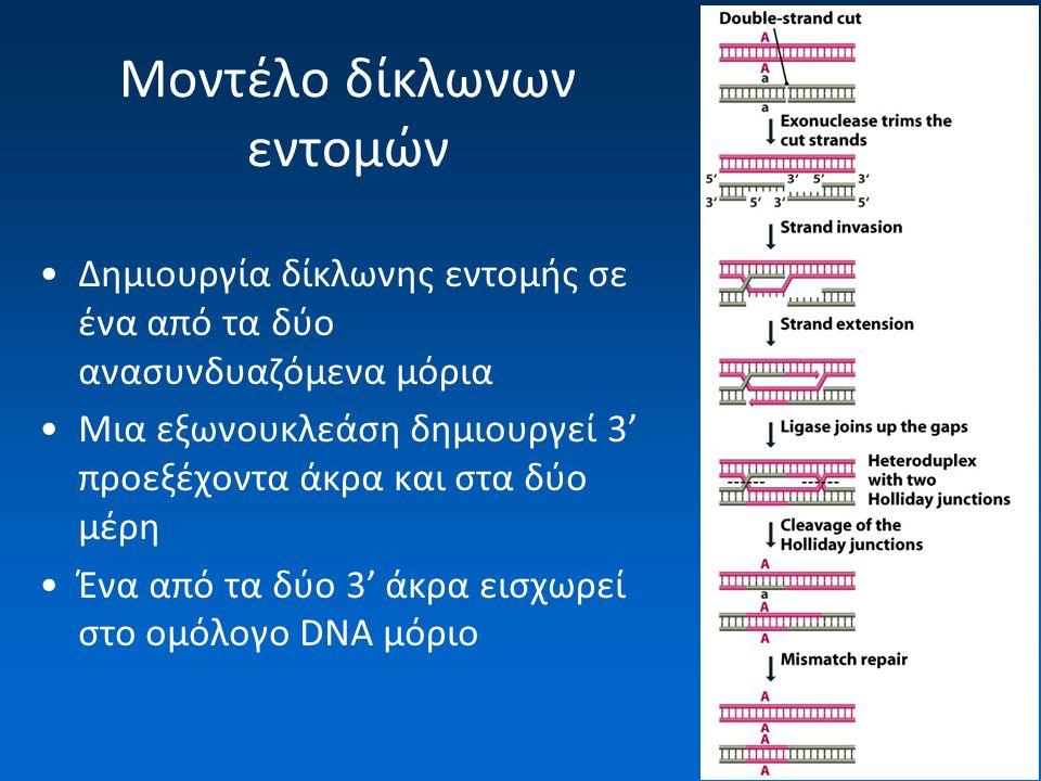 Μοντέλο δίκλωνων εντομών