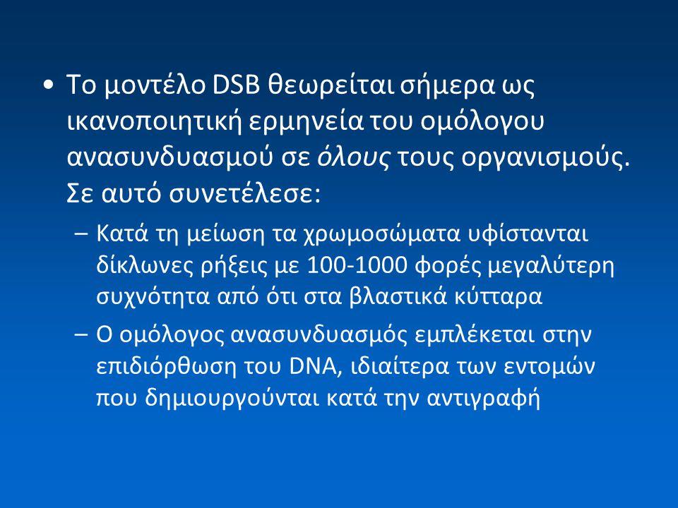 Το μοντέλο DSB θεωρείται σήμερα ως ικανοποιητική ερμηνεία του ομόλογου ανασυνδυασμού σε όλους τους οργανισμούς. Σε αυτό συνετέλεσε: