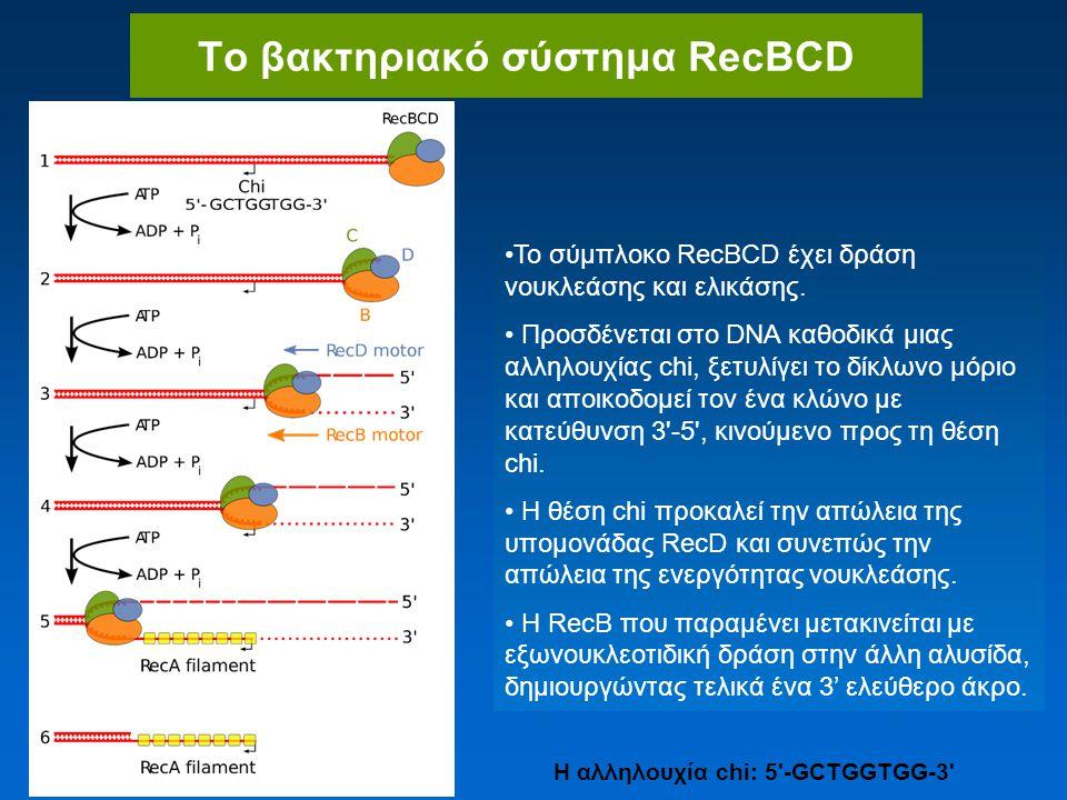 Το βακτηριακό σύστημα RecBCD