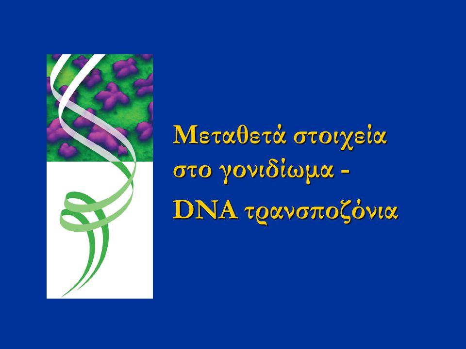 Μεταθετά στοιχεία στο γονιδίωμα -