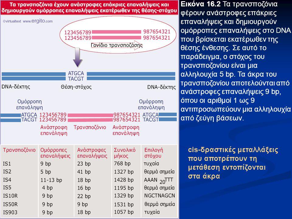 Εικόνα 16.2 Τα τρανσποζόνια φέρουν ανάστροφες επάκριες επαναλήψεις και δημιουργούν ομόρροπες επαναλήψεις στο DNA που βρίσκεται εκατέρωθεν της θέσης ένθεσης. Σε αυτό το παράδειγμα, ο στόχος του τρανσποζονίου είναι μια αλληλουχία 5 bp. Τα άκρα του τρανσποζονίου αποτελούνται από ανάστροφες επαναλήψεις 9 bp, όπου οι αριθμοί 1 ως 9 αντιπροσωπεύουν μια αλληλουχία από ζεύγη βάσεων.