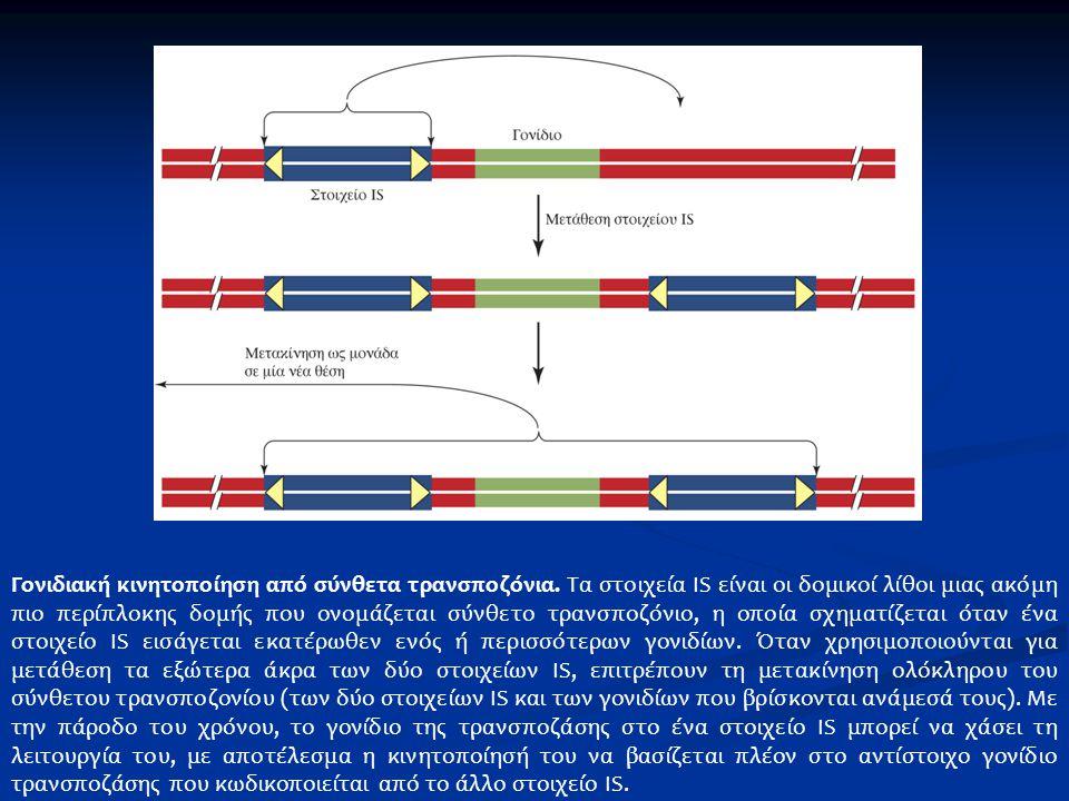 Γονιδιακή κινητοποίηση από σύνθετα τρανσποζόνια