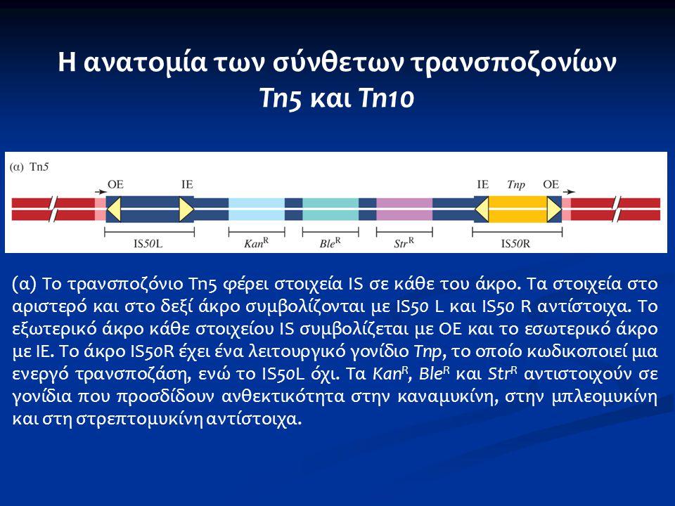 Η ανατομία των σύνθετων τρανσποζονίων Tn5 και Tn10