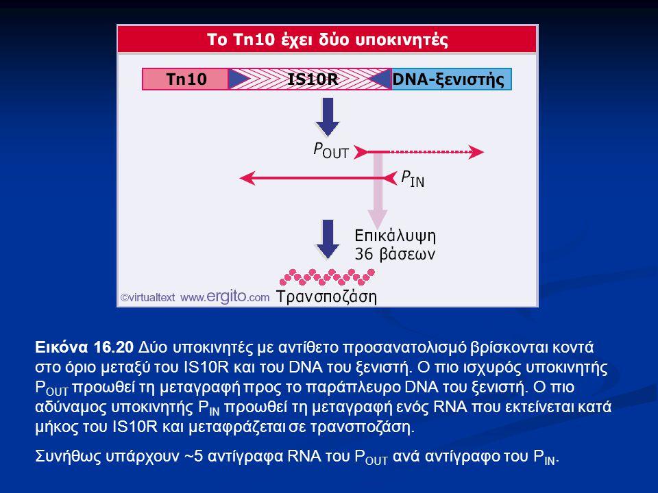 Εικόνα 16.20 Δύο υποκινητές με αντίθετο προσανατολισμό βρίσκονται κοντά στο όριο μεταξύ του IS10R και του DNA του ξενιστή. Ο πιο ισχυρός υποκινητής POUT προωθεί τη μεταγραφή προς το παράπλευρο DNA του ξενιστή. Ο πιο αδύναμος υποκινητής ΡΙΝ προωθεί τη μεταγραφή ενός RNA που εκτείνεται κατά μήκος του IS10R και μεταφράζεται σε τρανσποζάση.