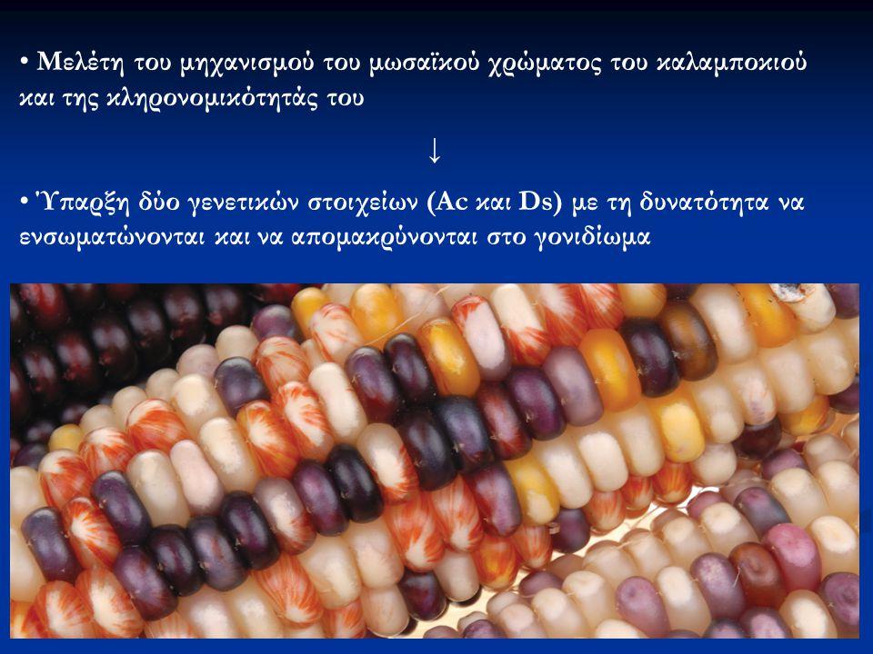 Μελέτη του μηχανισμού του μωσαϊκού χρώματος του καλαμποκιού και της κληρονομικότητάς του