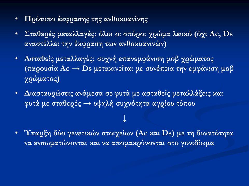 Πρότυπο έκφρασης της ανθοκυανίνης
