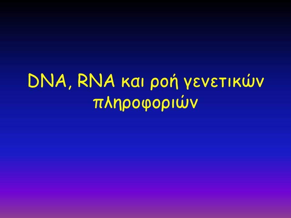 DNA, RNA και ροή γενετικών πληροφοριών