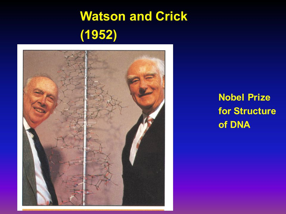 Watson and Crick (1952) Nobel Prize for Structure of DNA