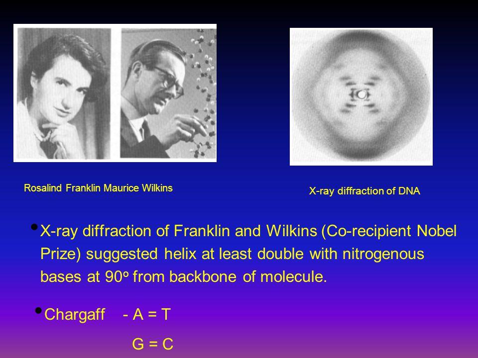 Rosalind Franklin Maurice Wilkins