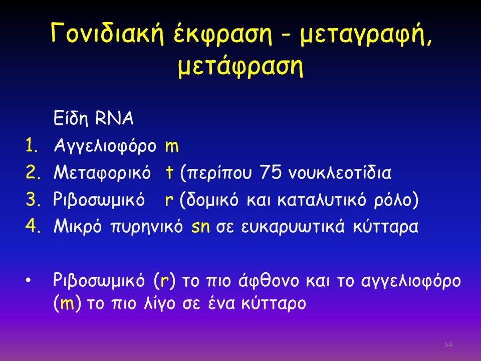 Γονιδιακή έκφραση - μεταγραφή, μετάφραση