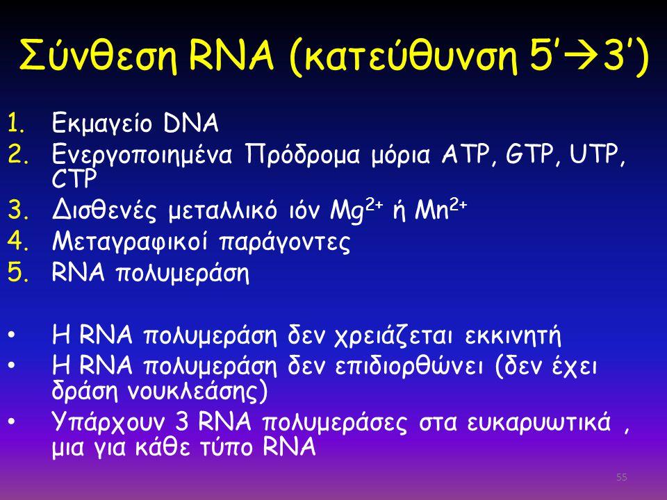 Σύνθεση RNA (κατεύθυνση 5'3')