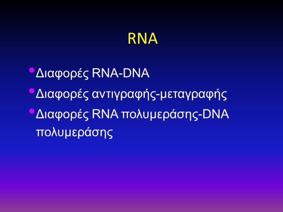 RNA Διαφορές RNA-DNA Διαφορές αντιγραφής-μεταγραφής