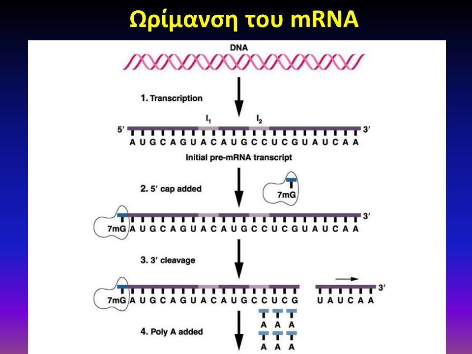 Ωρίμανση του mRNA Figure: 12-09a Caption: