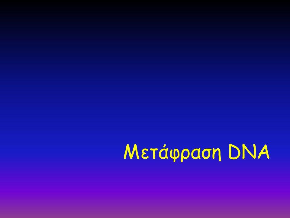 Μετάφραση DNA