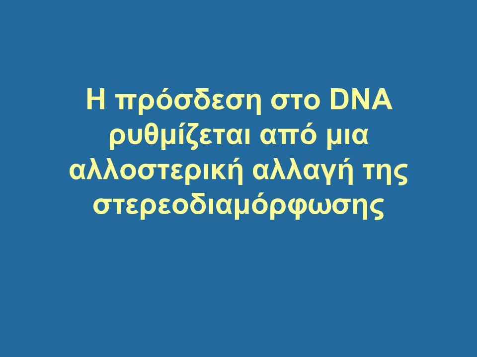 Η πρόσδεση στο DNA ρυθμίζεται από μια αλλοστερική αλλαγή της στερεοδιαμόρφωσης