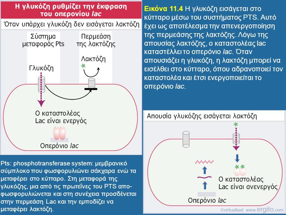 Εικόνα 11. 4 H γλυκόζη εισάγεται στο κύτταρο μέσω του συστήματος PTS
