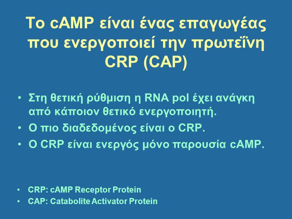 To cAMP είναι ένας επαγωγέας που ενεργοποιεί την πρωτεΐνη CRP (CAP)