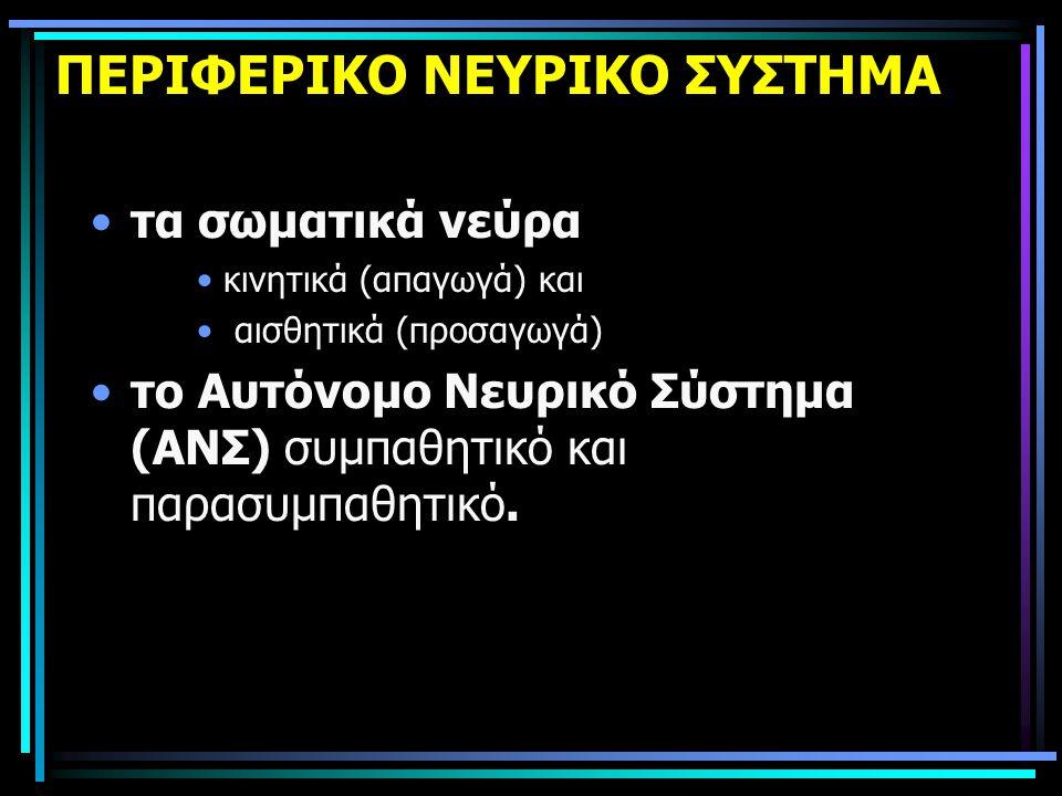 ΠΕΡΙΦΕΡΙΚΟ ΝΕΥΡΙΚΟ ΣΥΣΤΗΜΑ