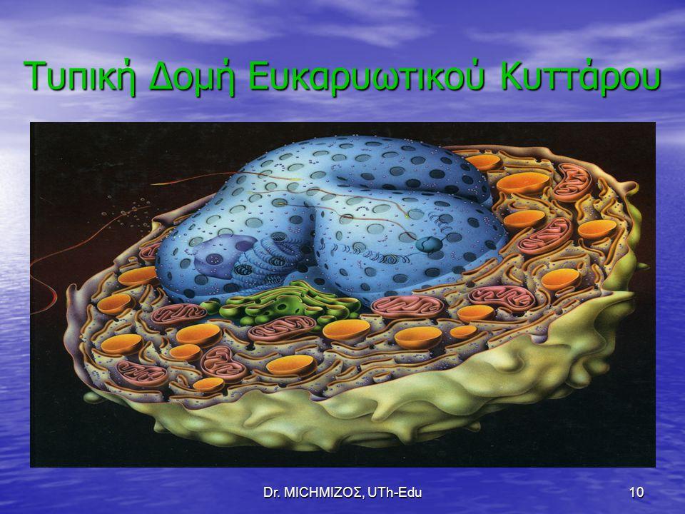 Τυπική Δομή Ευκαρυωτικού Κυττάρου