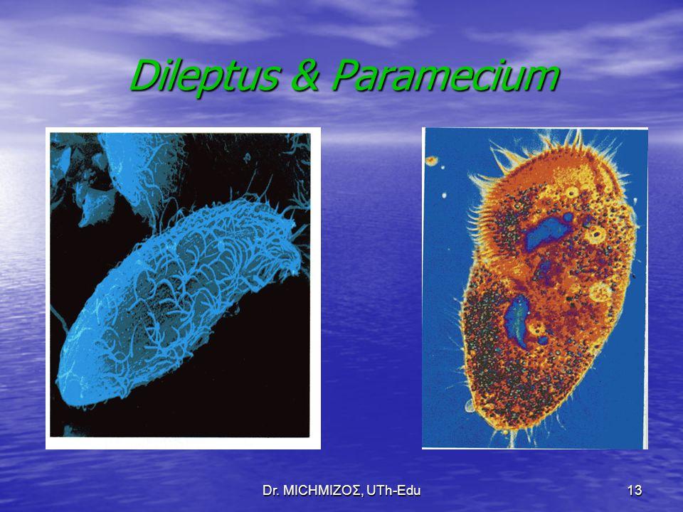 Dileptus & Paramecium Dr. ΜΙCHΜΙΖΟΣ, UTh-Edu