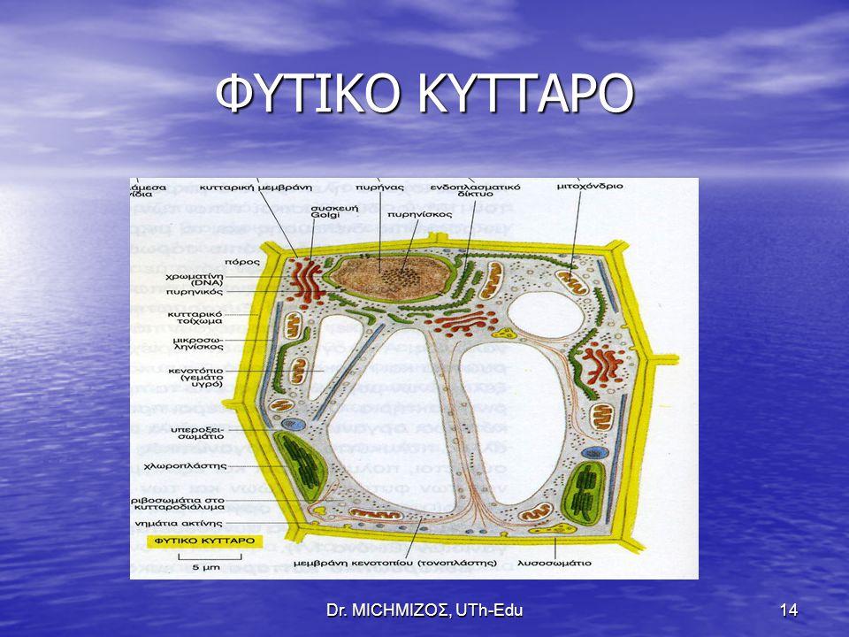 ΦΥΤΙΚΟ ΚΥΤΤΑΡΟ Dr. ΜΙCHΜΙΖΟΣ, UTh-Edu