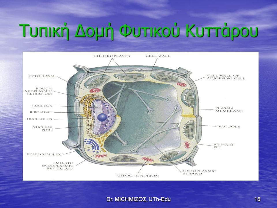 Τυπική Δομή Φυτικού Κυττάρου