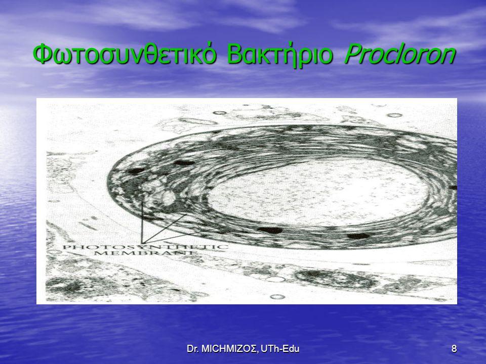 Φωτοσυνθετικό Βακτήριο Procloron