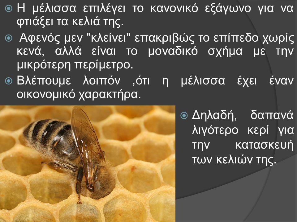 Η μέλισσα επιλέγει το κανονικό εξάγωνο για να φτιάξει τα κελιά της.