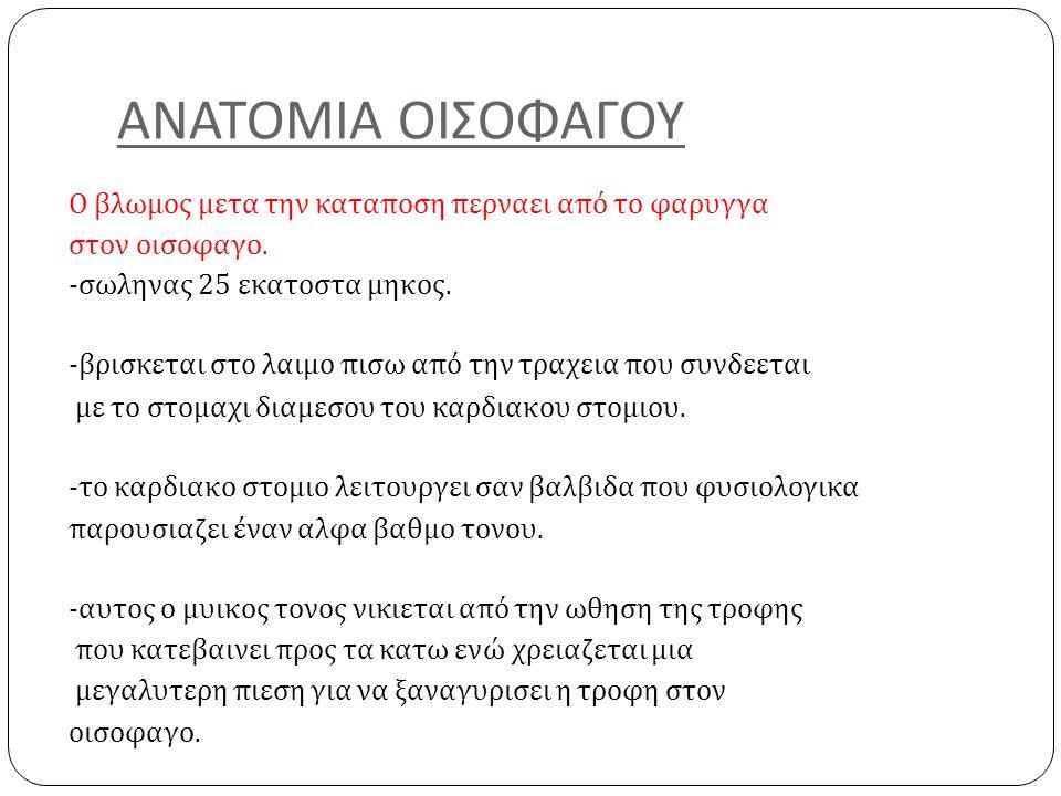 ΑΝΑΤΟΜΙΑ ΟΙΣΟΦΑΓΟΥ