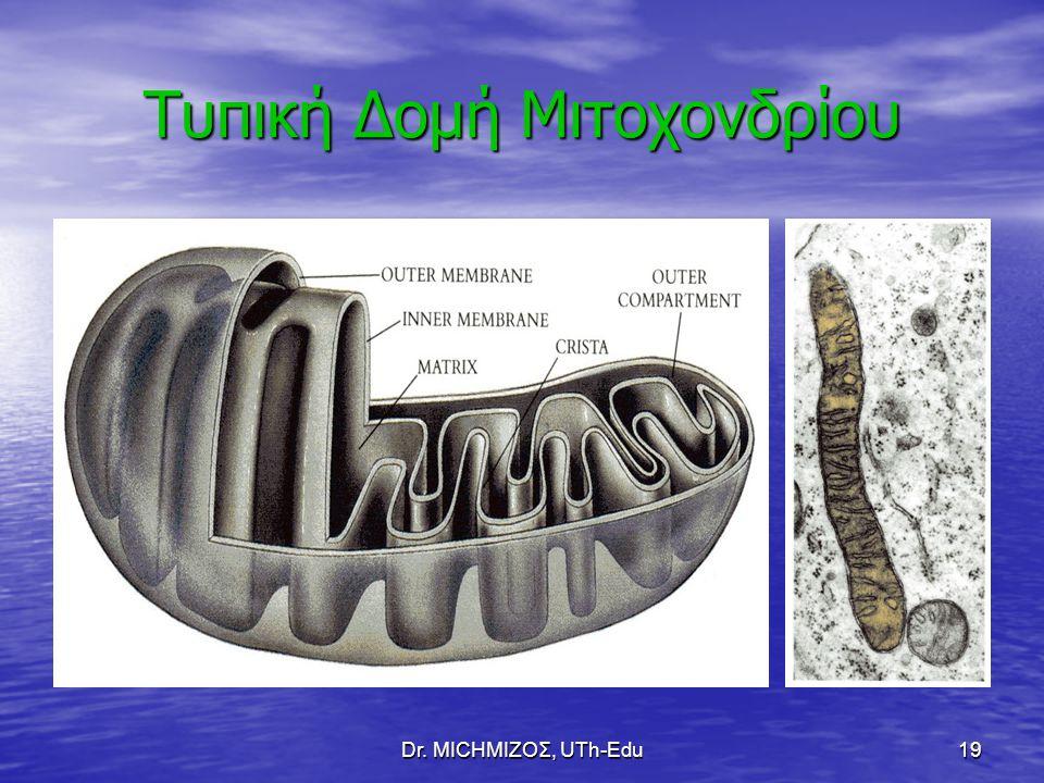 Τυπική Δομή Μιτοχονδρίου