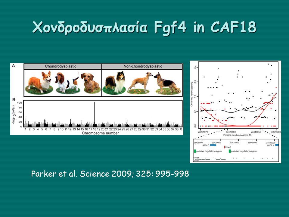 Χονδροδυσπλασία Fgf4 in CAF18