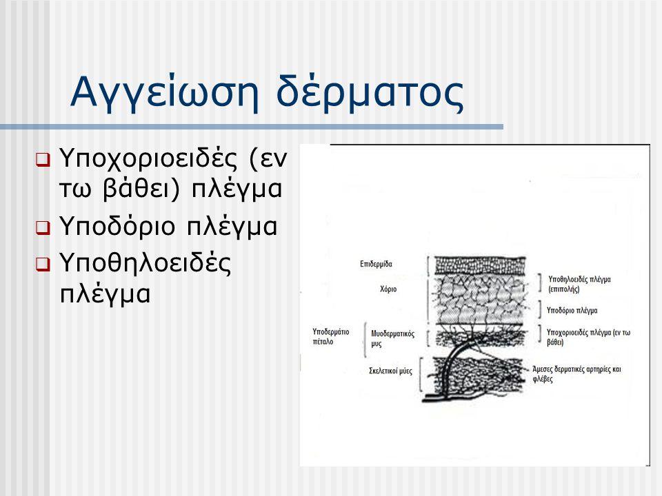 Αγγείωση δέρματος Υποχοριοειδές (εν τω βάθει) πλέγμα Υποδόριο πλέγμα