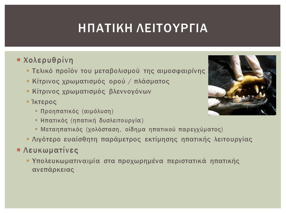 Ηπατικη λειτουργια Χολερυθρίνη Λευκωματίνες