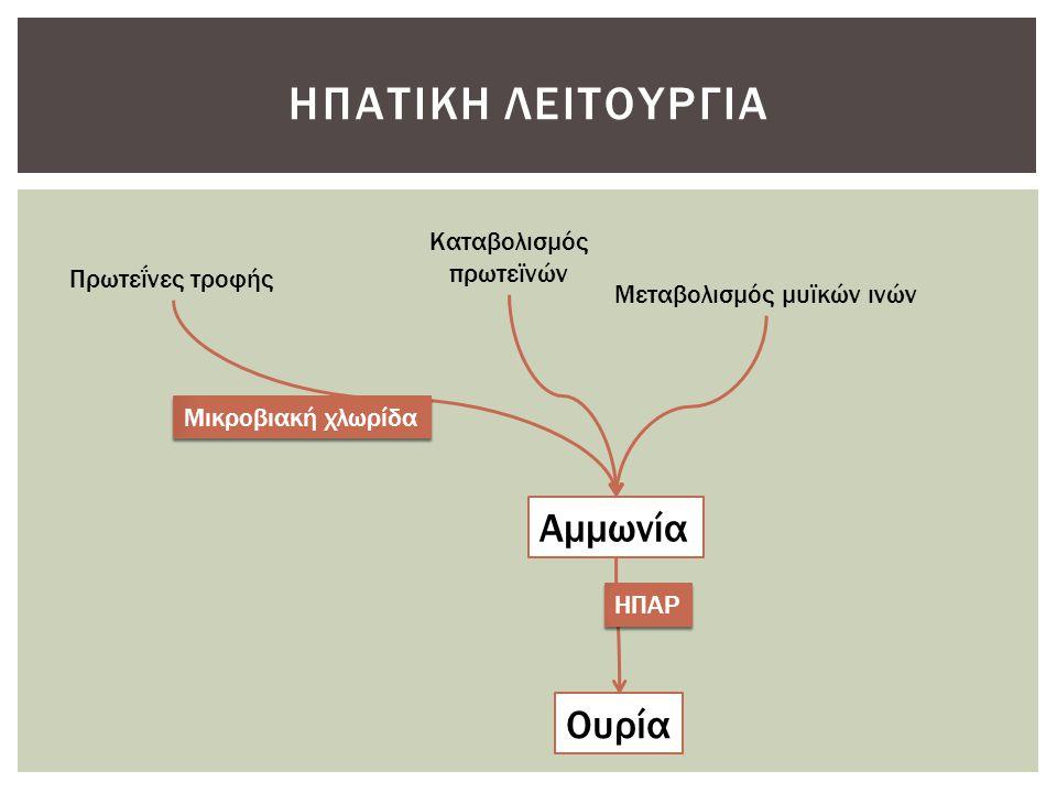 Ηπατικη λειτουργια Αμμωνία Ουρία Καταβολισμός πρωτεϊνών