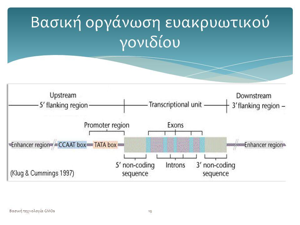 Βασική οργάνωση ευακρυωτικού γονιδίου