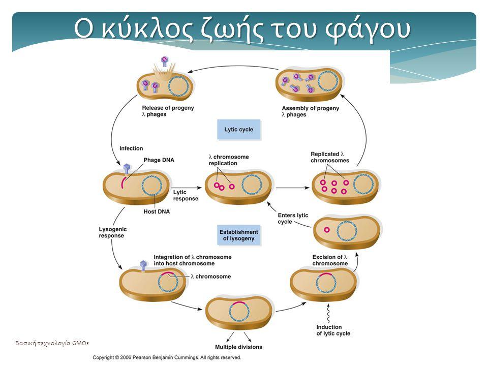 Ο κύκλος ζωής του φάγου Βασική τεχνολογία GMOs