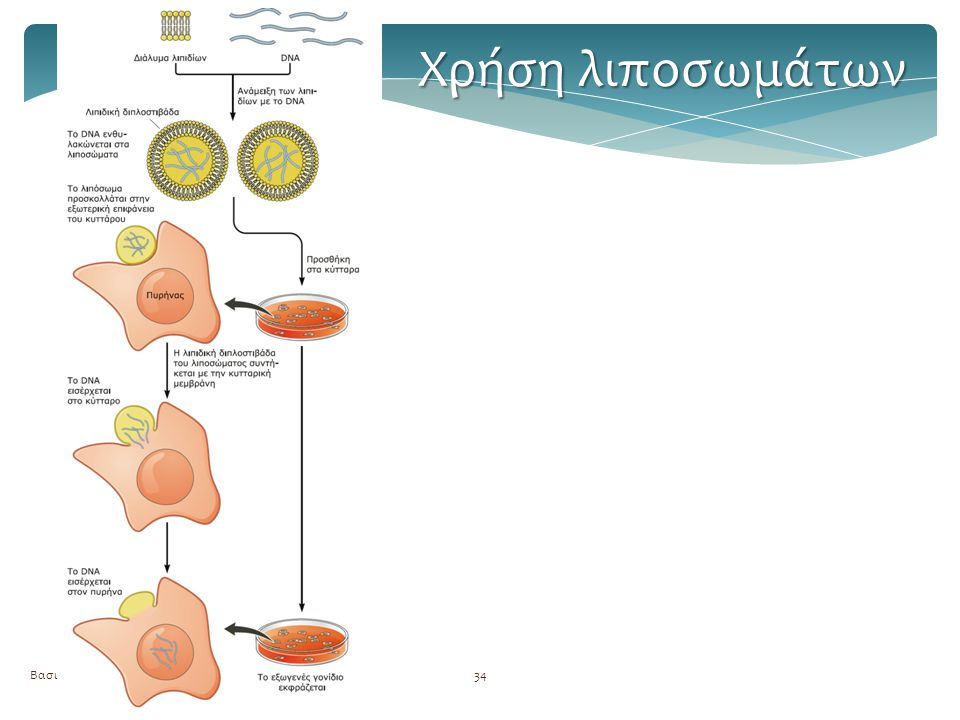 Χρήση λιποσωμάτων Βασική τεχνολογία GMOs