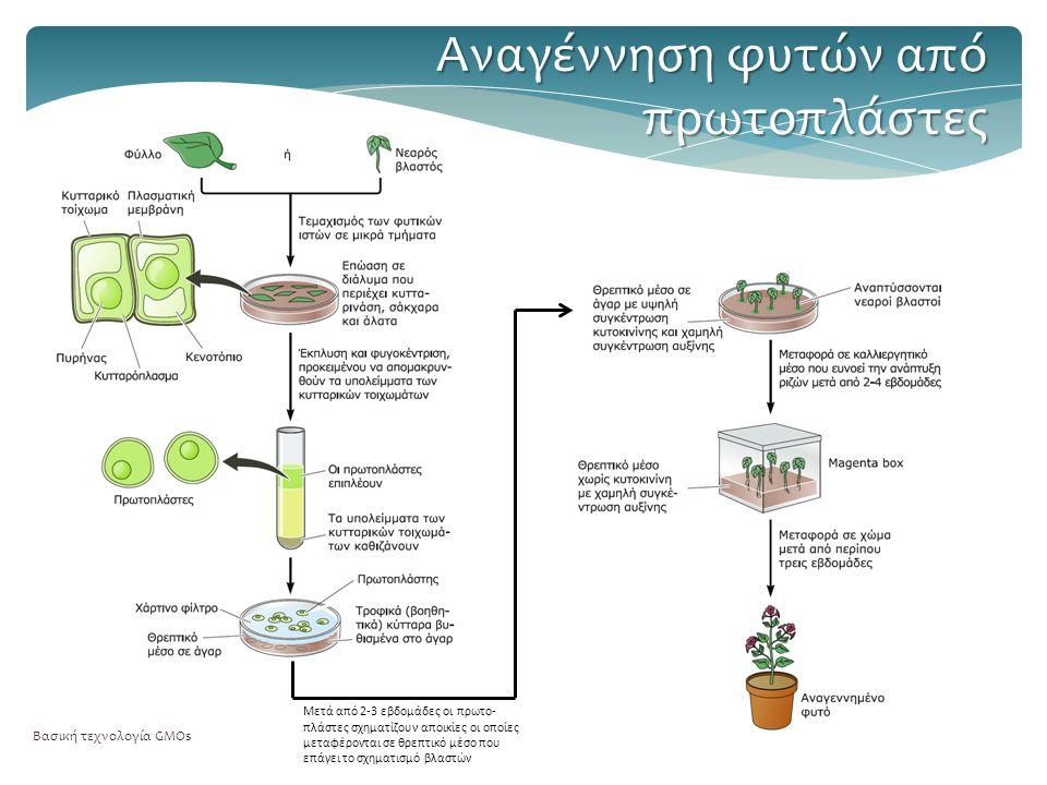Αναγέννηση φυτών από πρωτοπλάστες