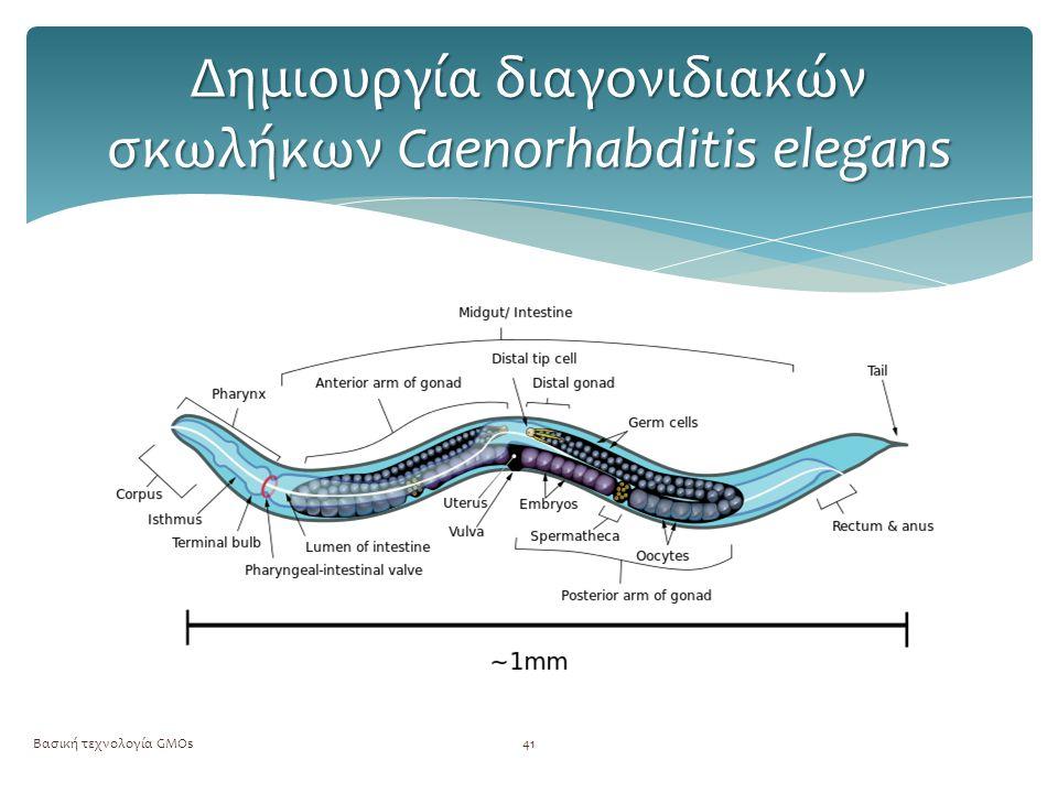 Δημιουργία διαγονιδιακών σκωλήκων Caenorhabditis elegans