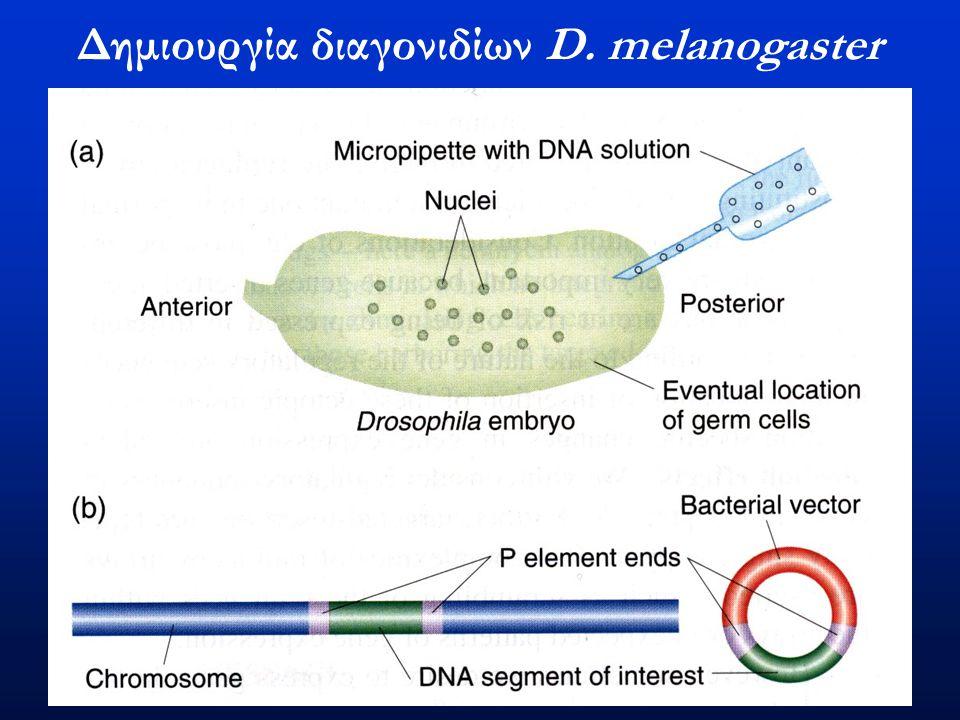 Δημιουργία διαγονιδίων D. melanogaster
